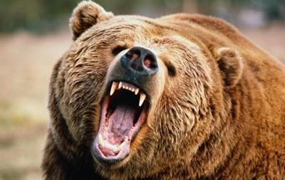 В США медведь загрыз туриста