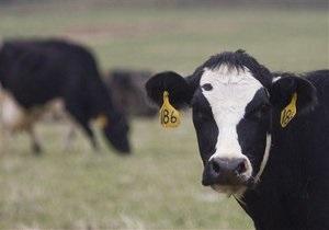 НГ: ЕС угробит аграриев Украины