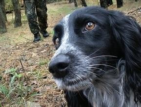 В Москве задержан убийца собак