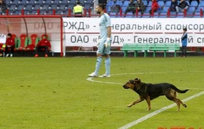 Локомотив оштрафуют за появление собаки на поле