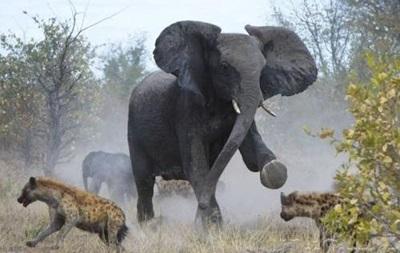 За 40 лет диких животных на Земле стало вдвое меньше