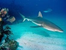 Глобальное потепление поможет спасти акул-нянек