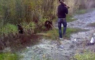 В России пьяный мужчина убил медвежонка