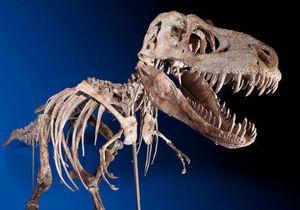 На нью-йоркском аукционе продали скелет монгольского тираннозавра