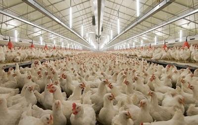 Украина начала поставки в ЕС продукции птицеводства