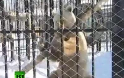 Кунг-фу медведь  из России продемонстрировал свои умения