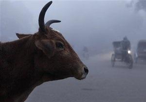 Австралия потребовала от Индонезии прекратить издевательства над животными
