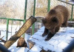 В Киевский зоопарк привезли медвежат Настю и Потапа
