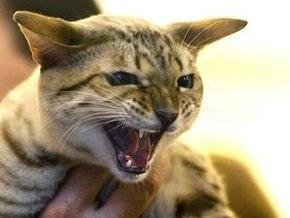 В Закарпатье бешеная кошка покусала двух человек