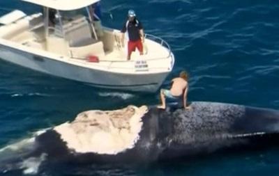 Австралиец прокатился на мертвом ките в окружении акул