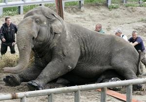 Ученые приравняли слонов к полноприводным автомобилям
