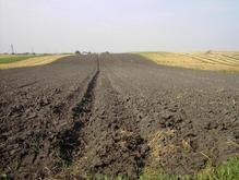 В 2008 году в Украине продали земли на 96 млн гривен