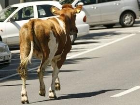 Мэр Душанбе запретил жителям разводить домашний скот