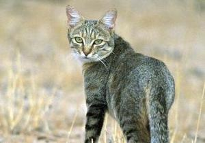 В Черкасской области бешеный кот покусал двух человек