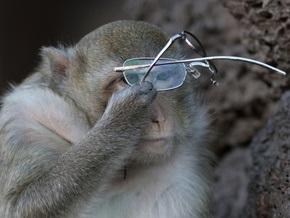 Фотогалерея: Праздник диких обезьян