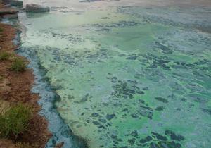 Минприроды выяснило происхождение пятен в Черном море