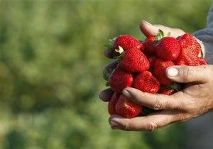 Волынские налоговики будут контролировать сбор грибов и ягод