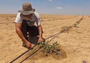 Корреспондент: На пустом месте. Израиль заставил плодоносить камни