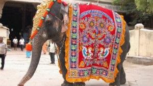 Как заставить храмовых слонов в Индии похудеть