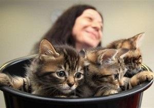 Американские ученые разглядели, как лакают кошки