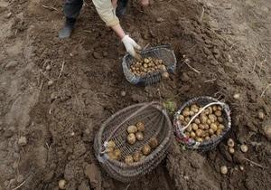 Кабмин выделит на развитие овощеводства 30,8 млрд гривен