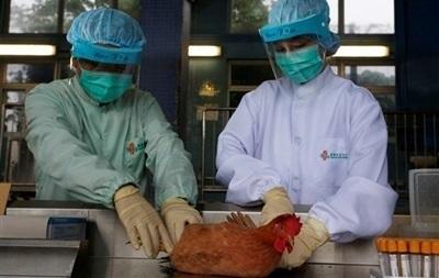 В Гонконге из-за птичьего гриппа уничтожат 15 тысяч кур