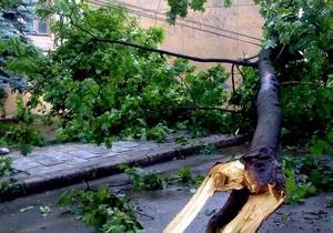 Гроза в Киевской области: в результате падения дерева погиб человек