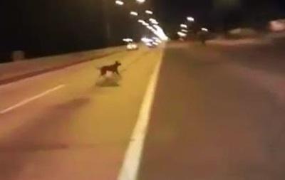 Собака-телепортака стала хитом YouTube