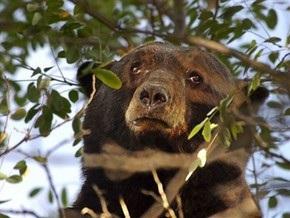 В Индии медведь ликвидировал группу исламистских боевиков