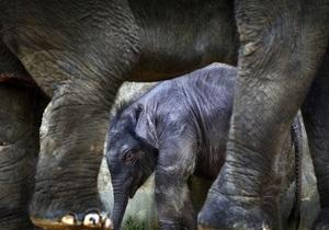 В образовательных целях. Посетителям зоопарка Тайваня расскажут об экскрементах коал и слонов