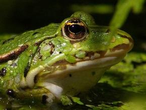 Ядовитые жабы стали причиной гибели австралийских крокодилов