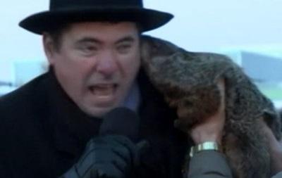 В США сурок укусил мэра за ухо во время церемонии предсказания