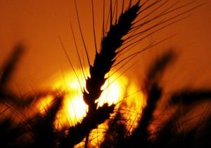 Президент Казахстана ожидает собрать в этом году 18-20 млн тонн зерновых
