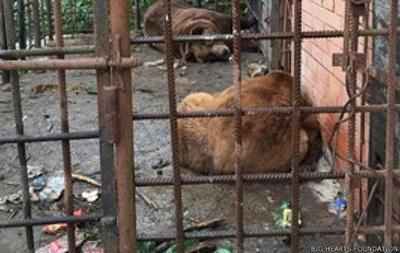Медведям-пьяницам из Сочи нашли приют в Румынии