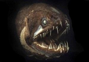 Самое масштабное исследование мирового океана: обнаружена рыба с зубами на языке и медуза с сигнализацией