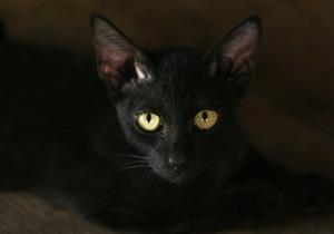 В России проникший в ломбард кот вызвал группу быстрого реагирования