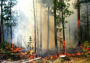 Гидрометцентр предупредил о высокой пожароопасности в ряде областей Украины