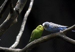 В Ковеле из зоомагазина похитили 32 попугая