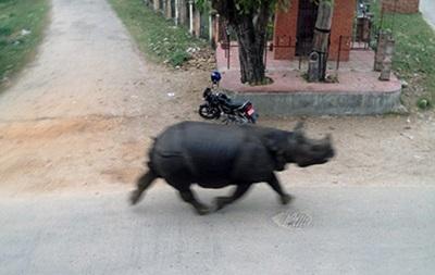 В Непале носорог убил женщину