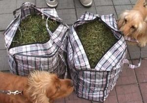В Полтаве задержан мужчина, который перевозил 26 кг марихуаны