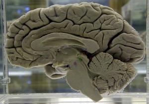 Британские ученые сумели объединить силу мысли двух человек