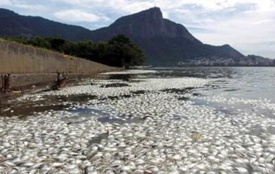 В гребном канале Олимпиады-2016 в Рио нашли 21 тонну мертвой рыбы
