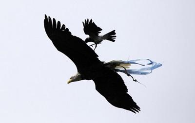 Перед матчем с Кьево на символа Лацио орла напала ворона