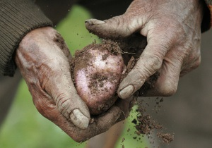СМИ: В Украине растут цены на картофель
