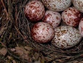 Россияне проверяют на наличие птичьего гриппа обнаруженное в японской иномарке гнездо