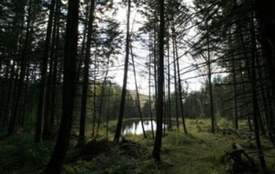 Госагентство лесных ресурсов получило нового руководителя