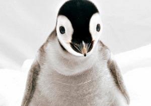 Эксперты: Численность пингвинов в Антарктиде уменьшается из-за нехватки еды
