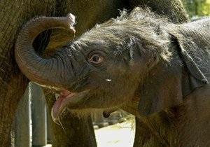 В Зимбабве распродадут слоновую кость ради сохранения слонов