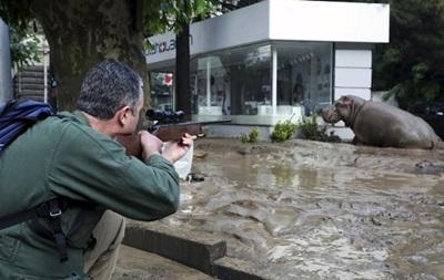 В Тбилиси из-за наводнения погибли 300 обитателей зоопарка