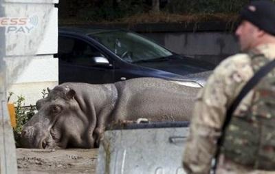 В Тбилиси больше нет сбежавших из зоопарка зверей – премьер